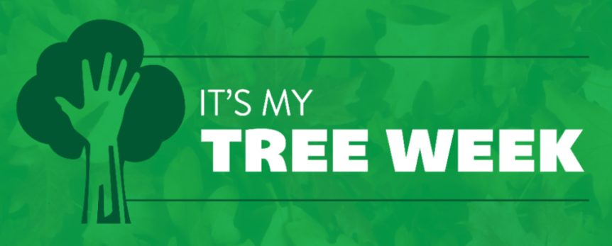 it's my tree week